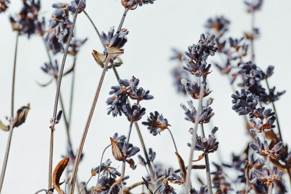 white and brown flowers in tilt shift lens