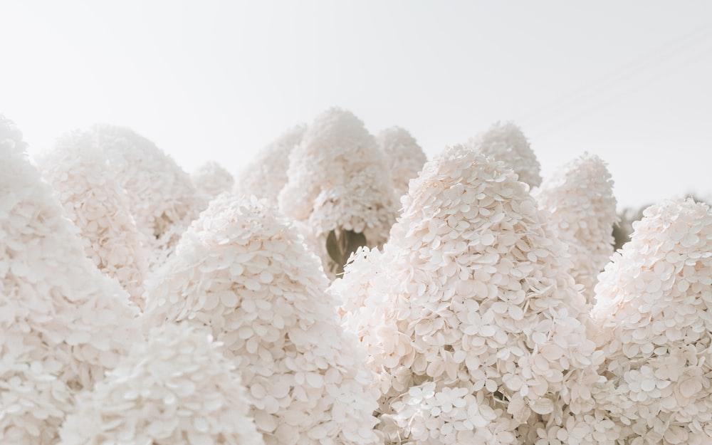white snow on white background