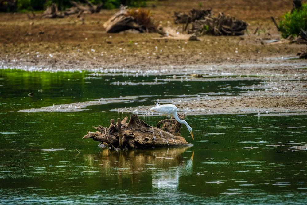 white bird on brown tree trunk on water during daytime