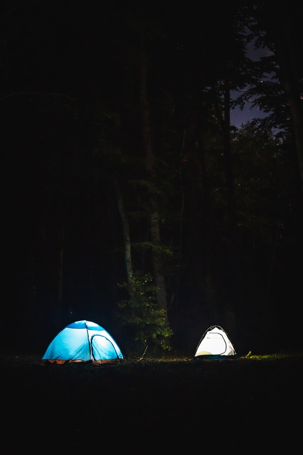 blue and white tent in forest during night time