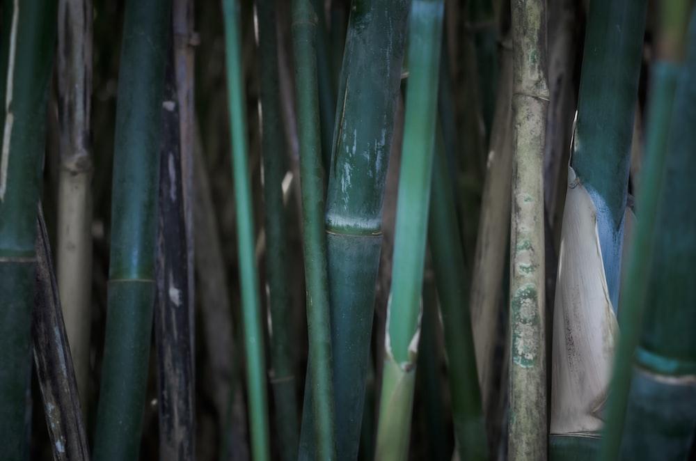 green bamboo stick during daytime