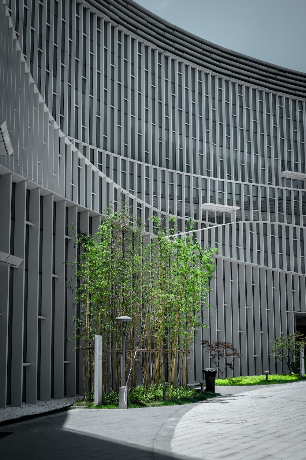green plants on white concrete building