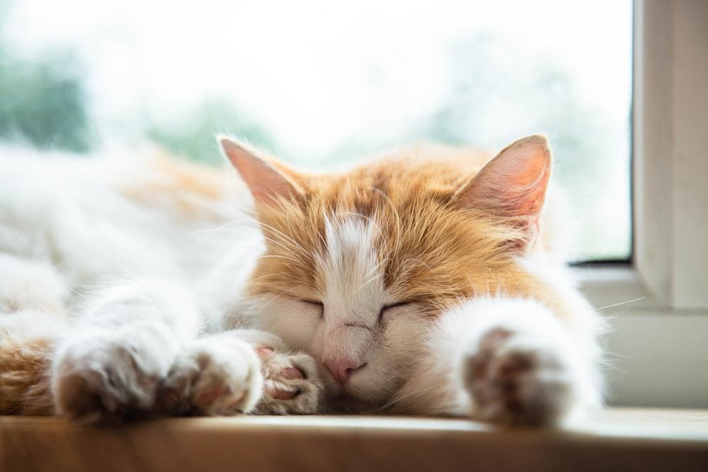 orange and white tabby cat lying on white surface