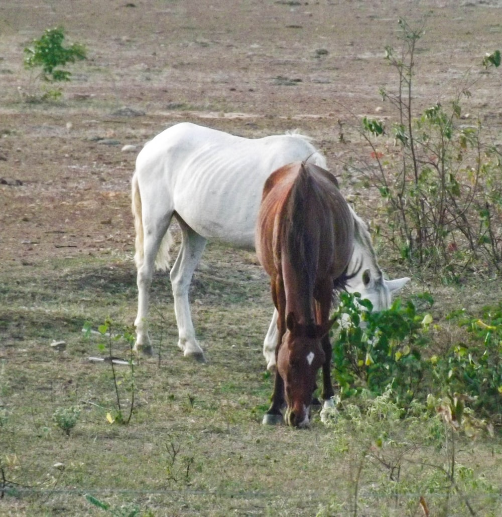 white and brown horse eating grass during daytime