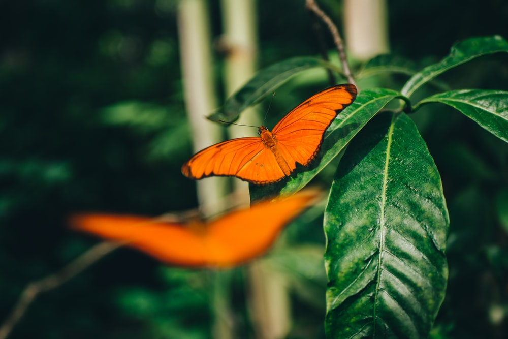orange butterfly perched on green leaf in close up photography during daytime