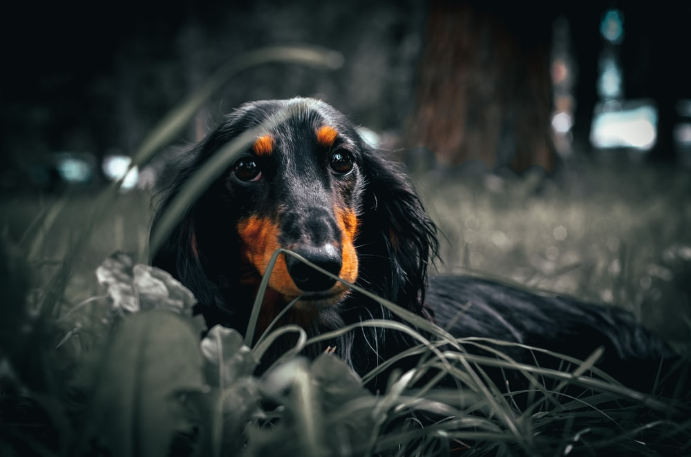 black and brown long coated dog on green grass during daytime