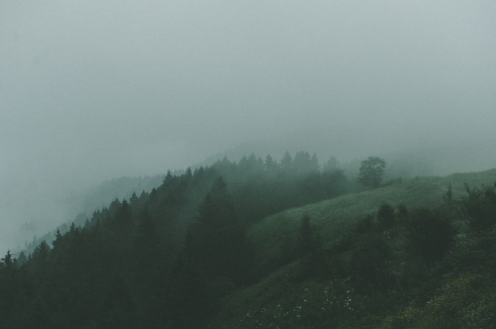 green trees on hill under white sky during daytime