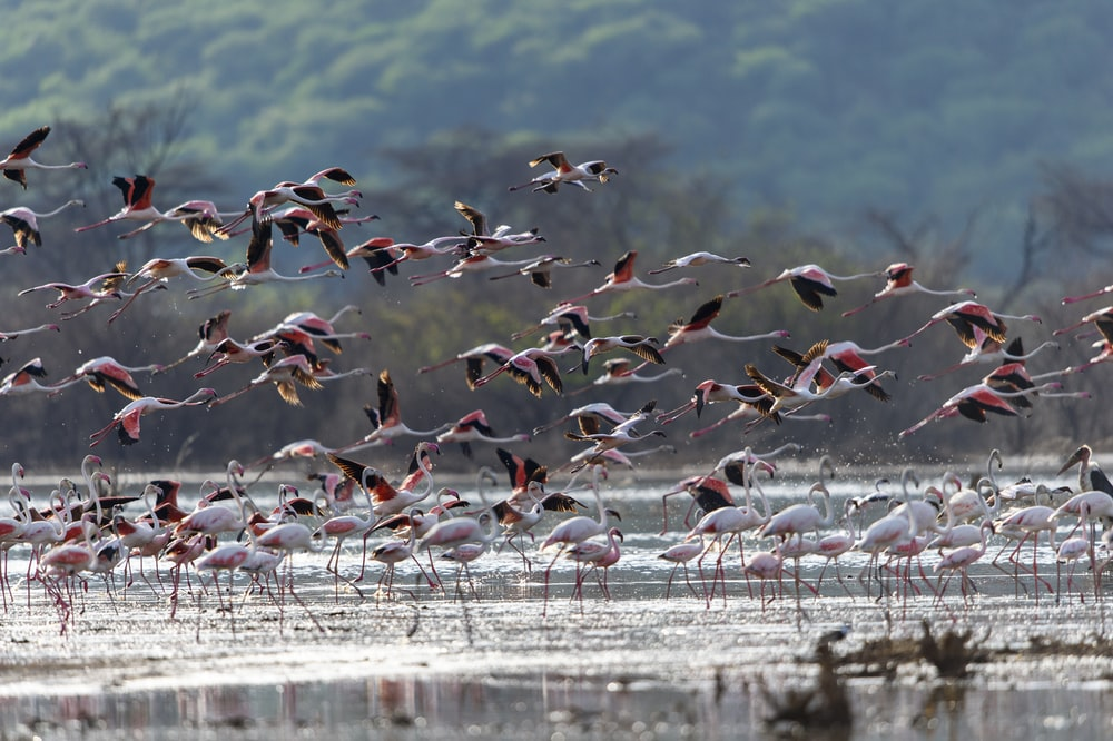 flock of birds on water during daytime