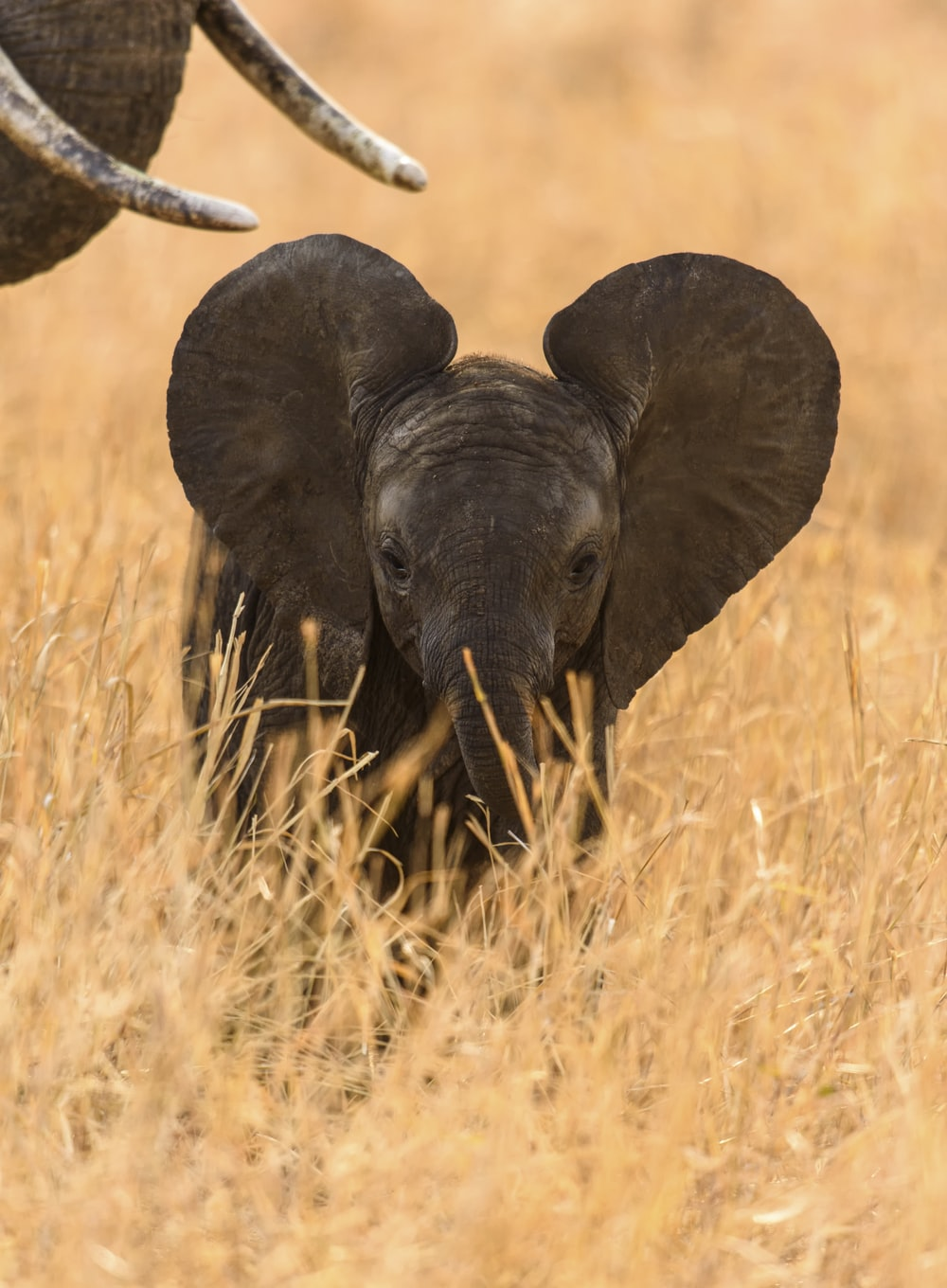 elephant on brown grass field during daytime