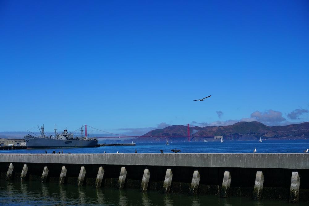 birds flying over the bridge during daytime