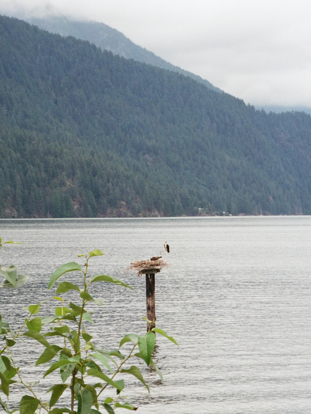 brown wooden stand on body of water during daytime