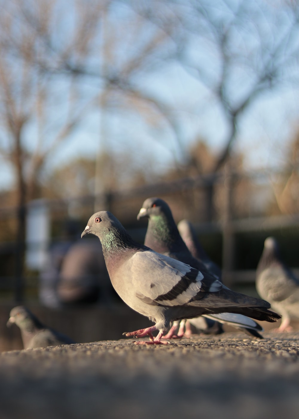 gray and white pigeon on brown wooden fence during daytime
