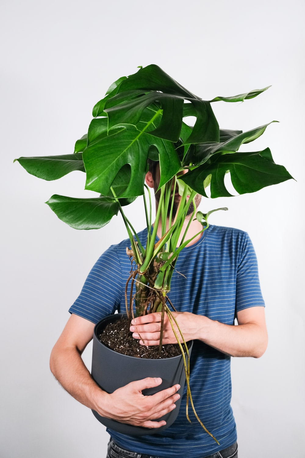 man in blue and white stripe shirt holding green plant