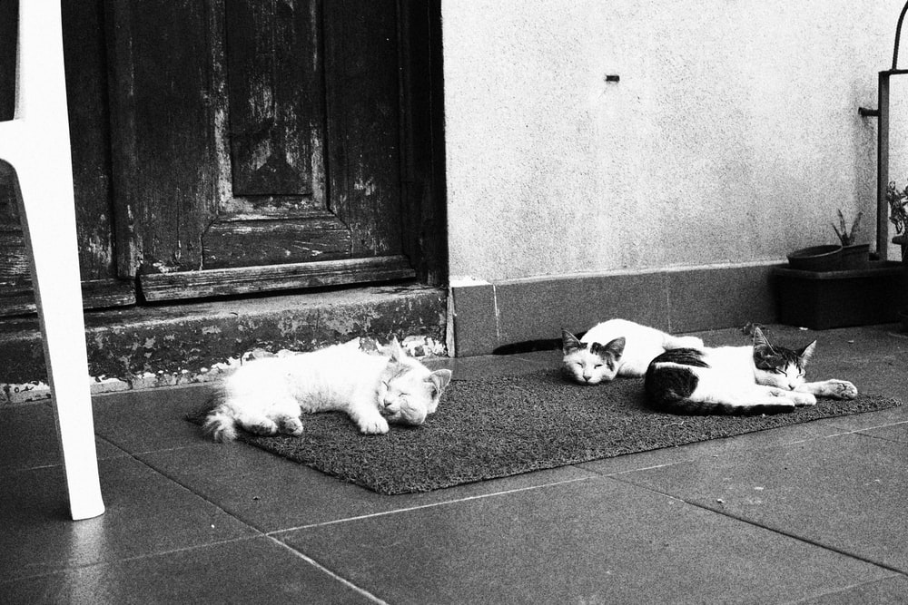 grayscale photo of 2 dogs lying on floor