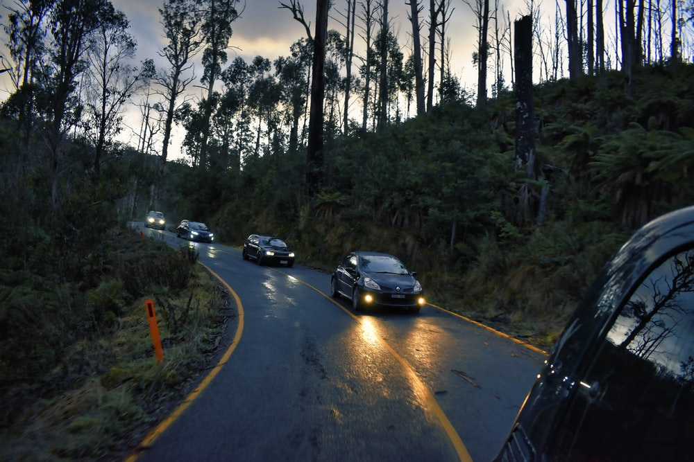 cars on road between trees during daytime