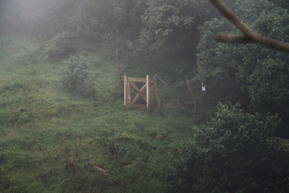 brown wooden bridge on green grass field