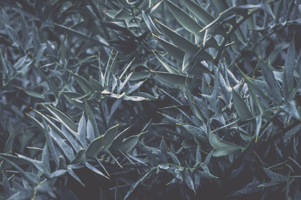 gray and black plant leaves