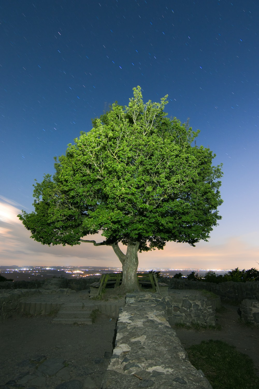 green tree on gray rock formation under blue sky during daytime