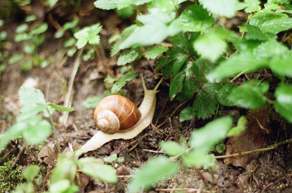 brown snail on green leaf plant