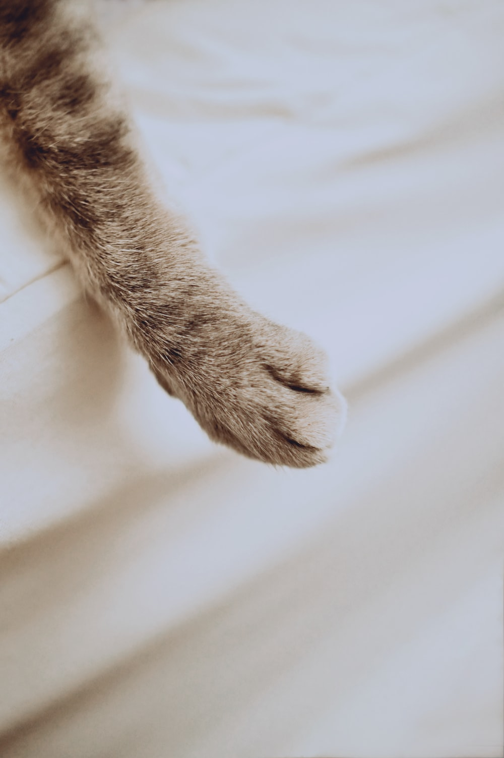 brown cat paw on white textile