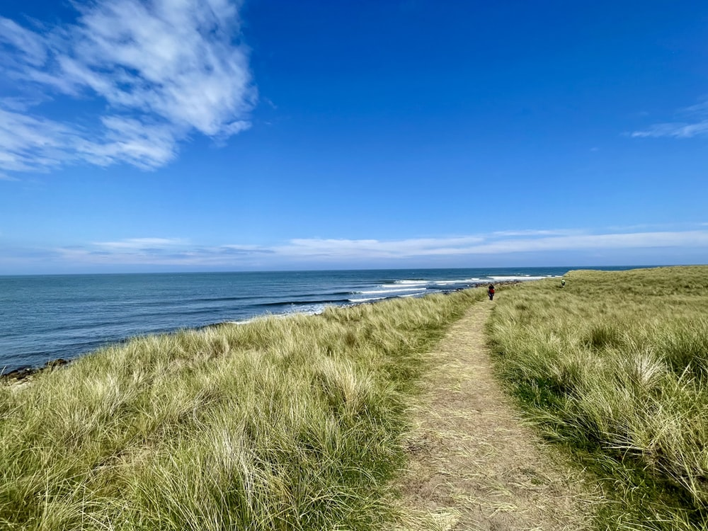 person walking on green grass field near sea under blue sky during daytime