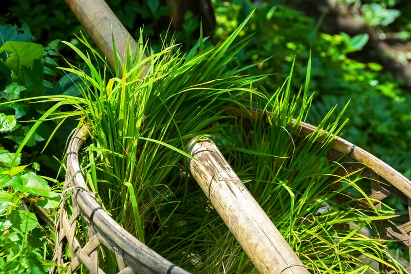 green grass on brown wooden fence