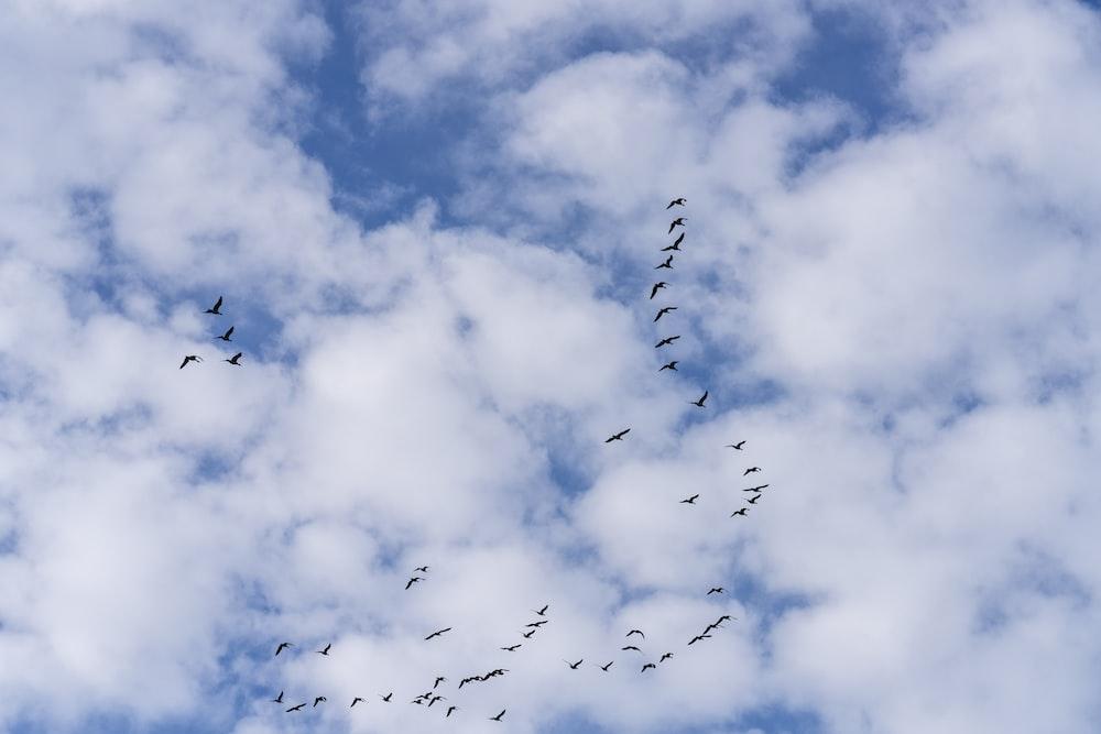 birds flying under white clouds during daytime