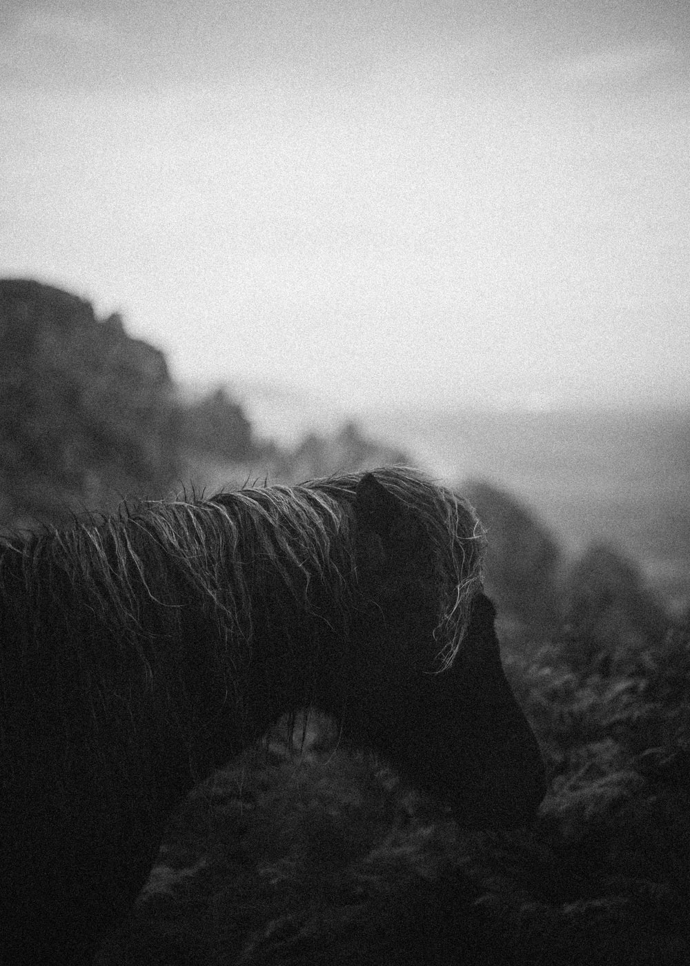 grayscale photo of a horse on a hill