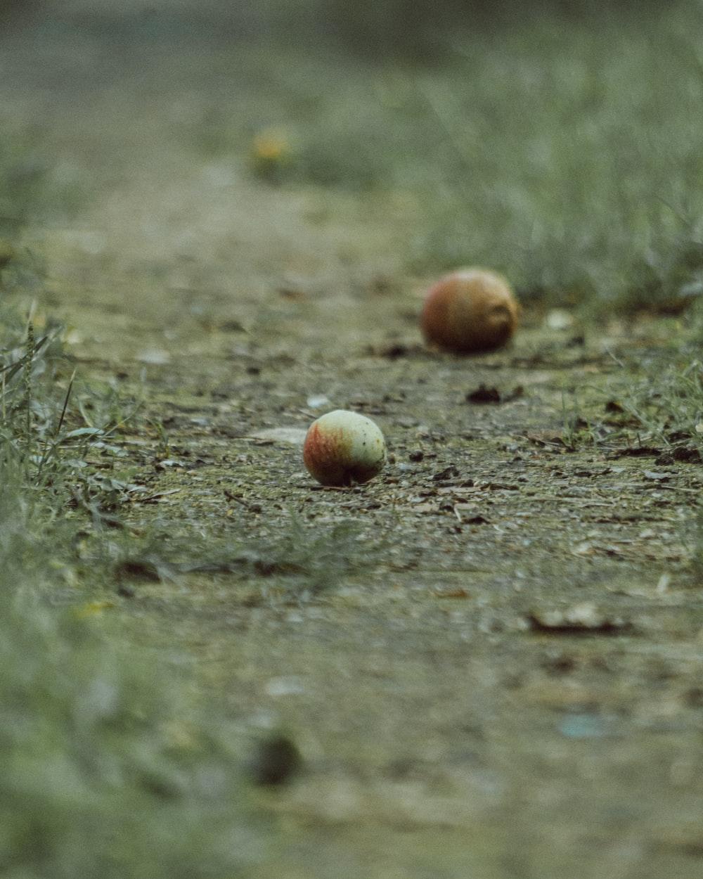brown round fruit on green grass during daytime