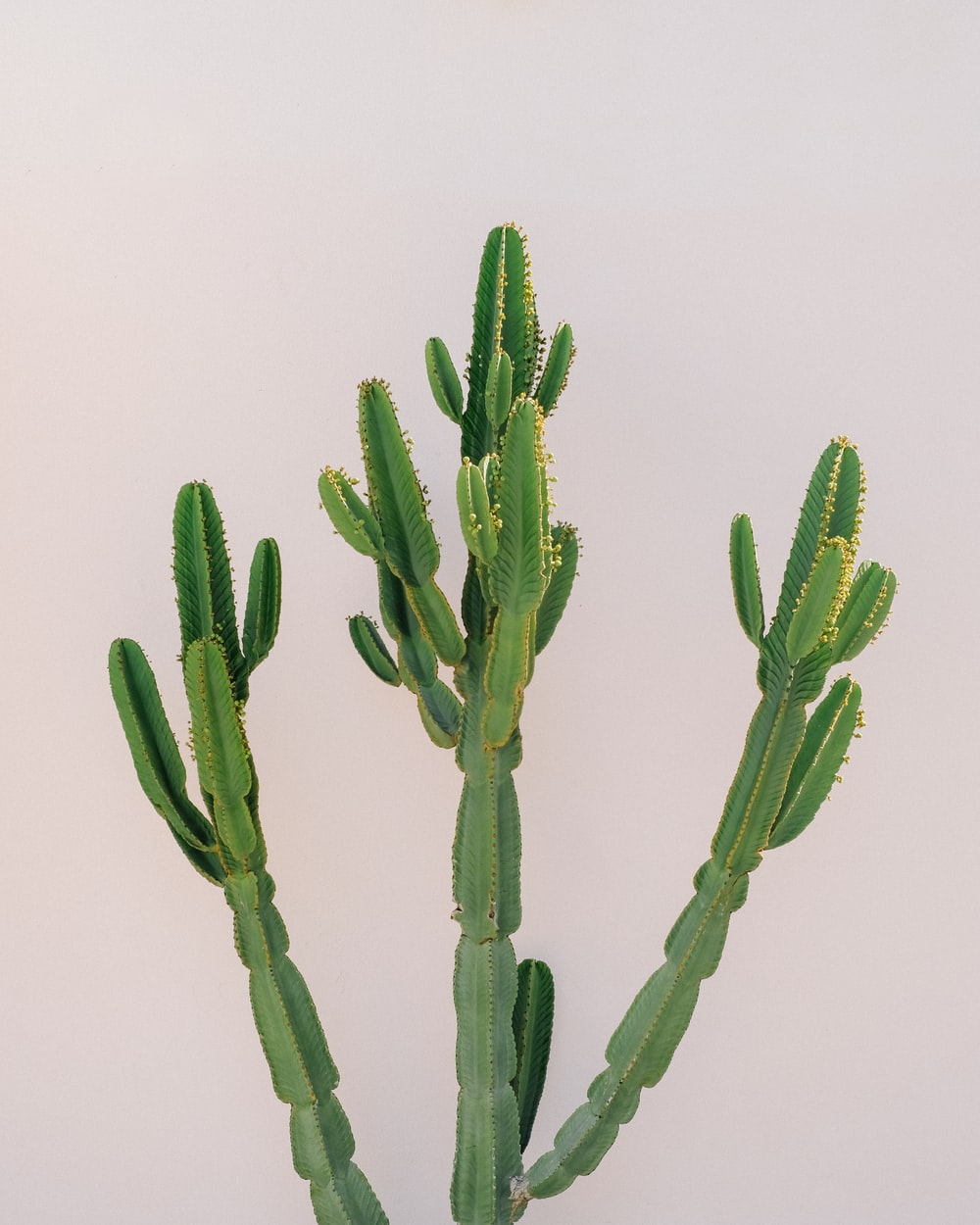 green cactus plant on white background