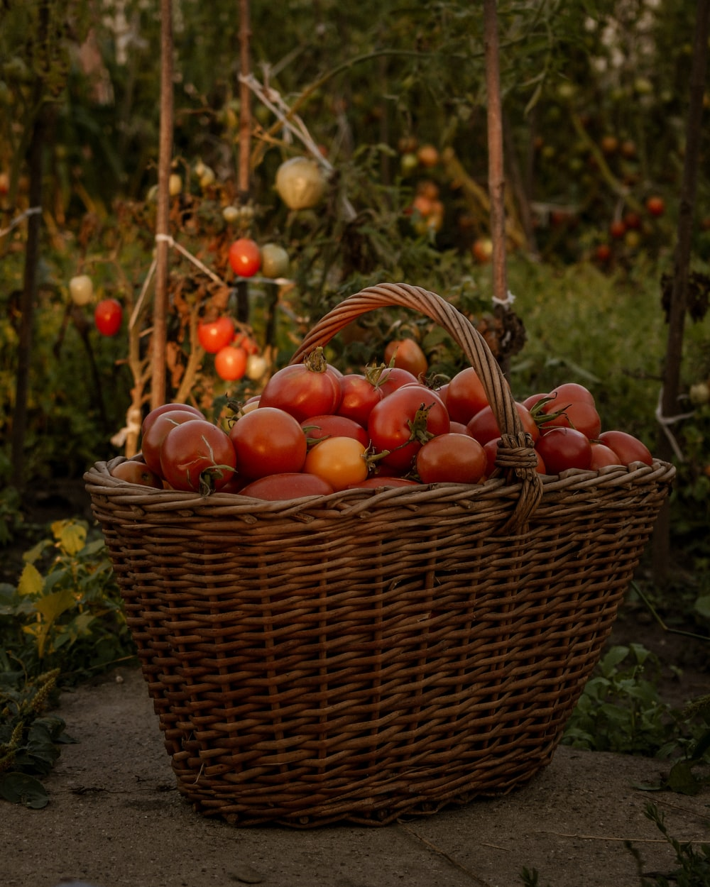 red and yellow round fruits in brown woven basket