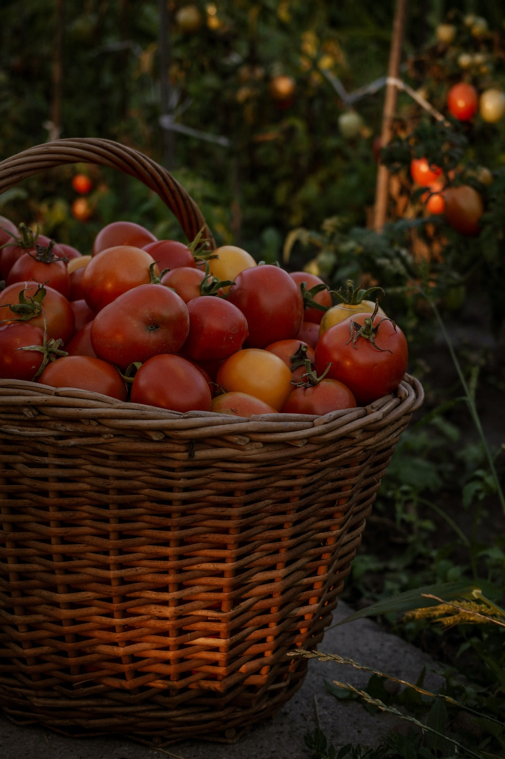 red apples in brown woven basket