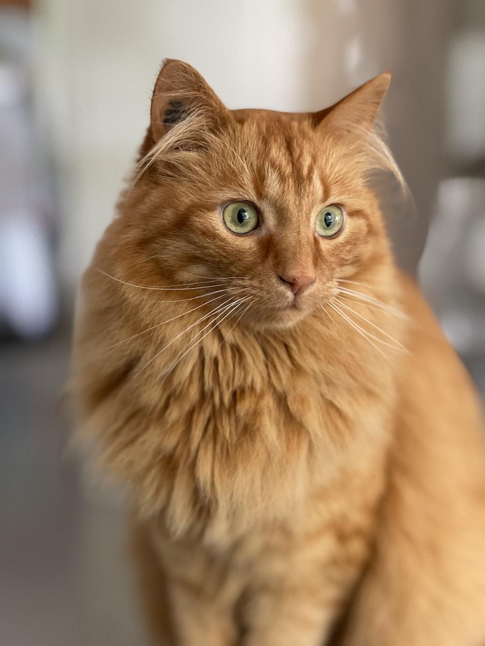 orange tabby cat in tilt shift lens