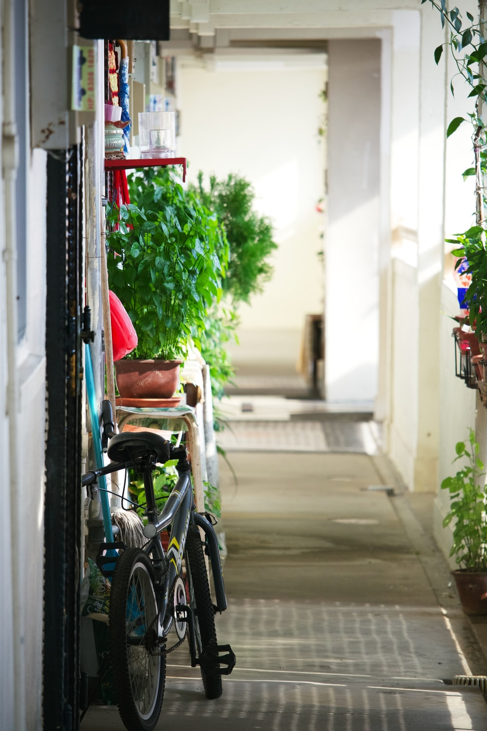 black bicycle parked beside green plant during daytime
