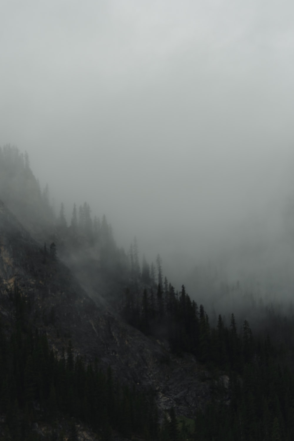 green trees on mountain covered with fog