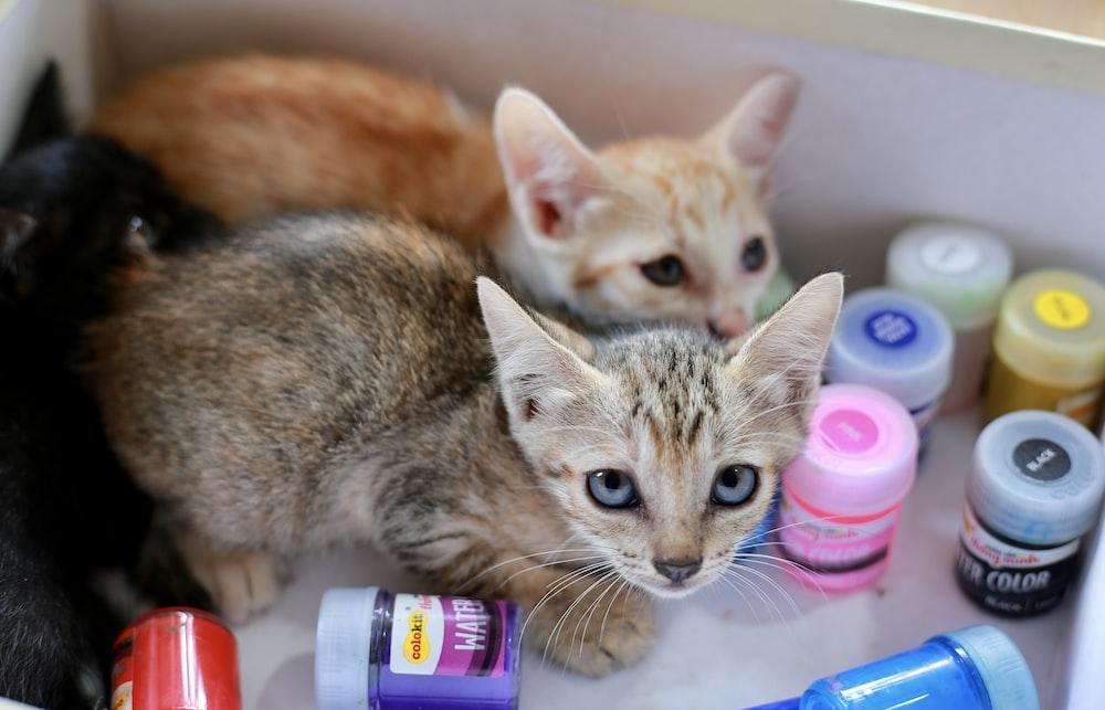 orange tabby cat on white ceramic sink