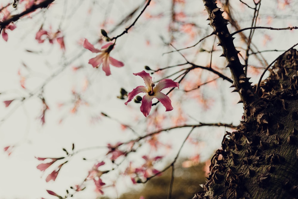 pink flower on brown tree branch