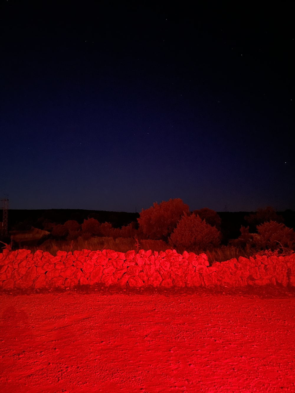 red trees under blue sky during night time