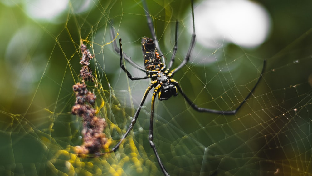 black and yellow spider on spider web during daytime