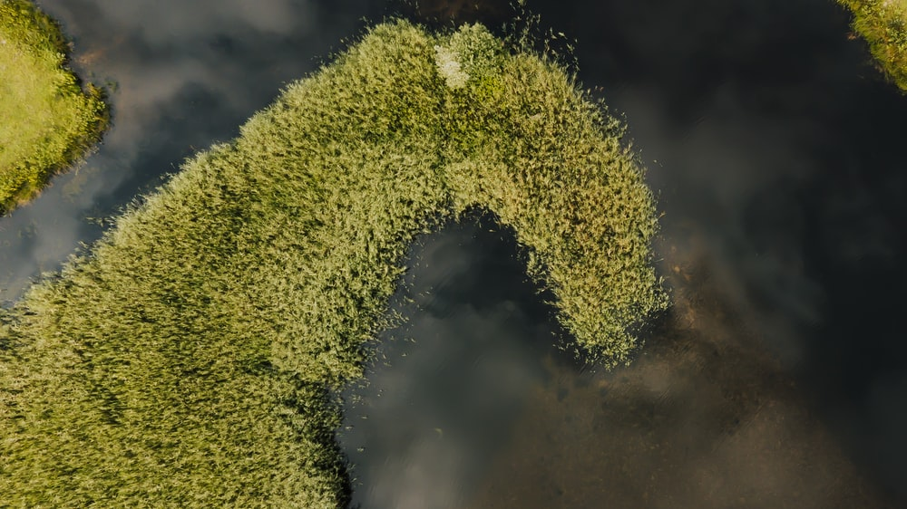 green moss on tree branch