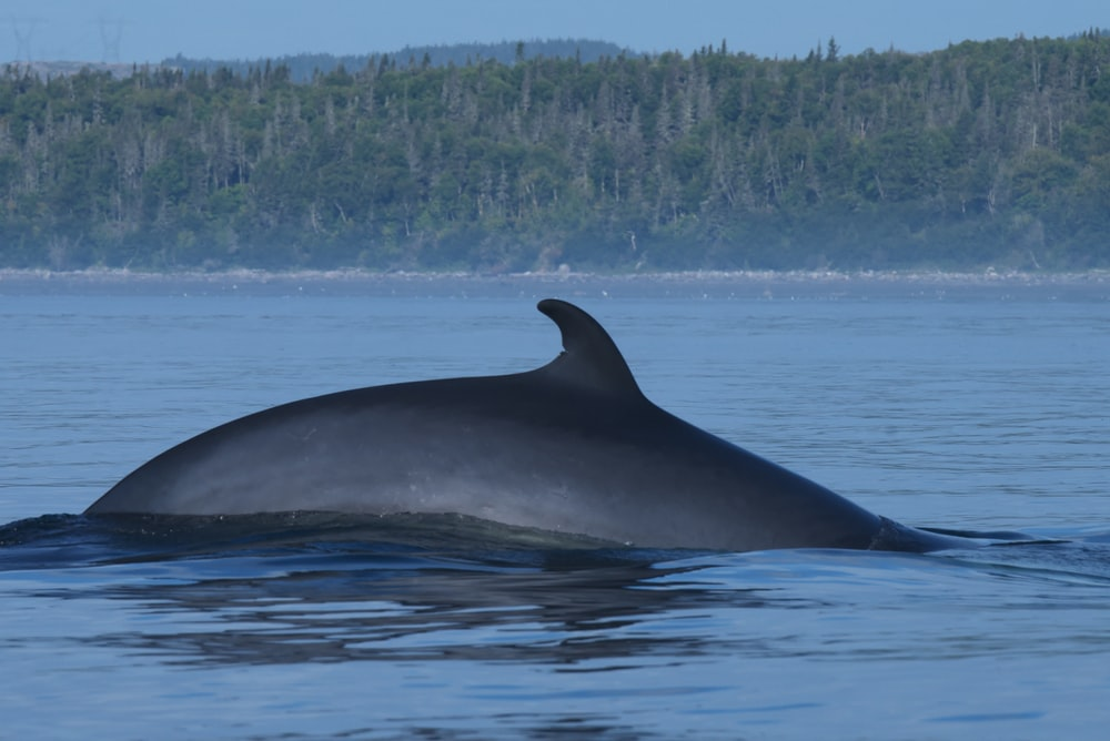 black whale on blue water during daytime