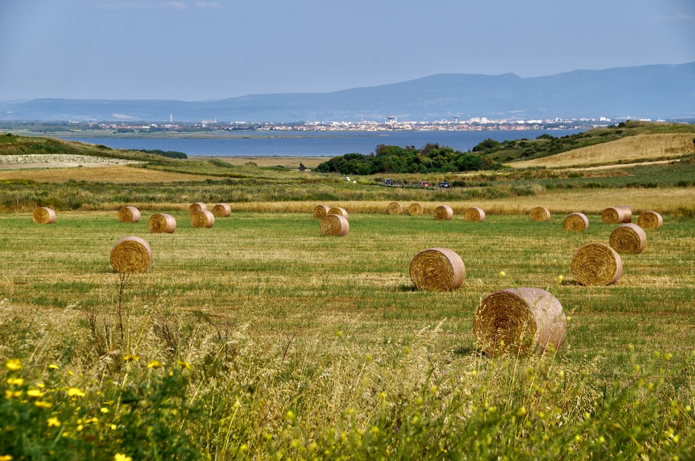 brown hays on green grass field during daytime