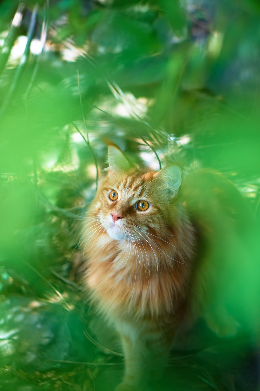 orange tabby cat on green textile
