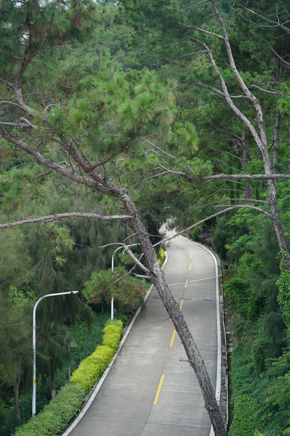green trees on gray concrete bridge during daytime