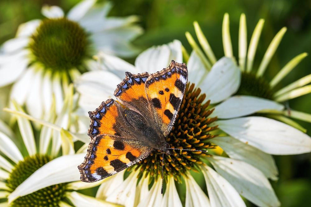 orange black and white butterfly on white flower