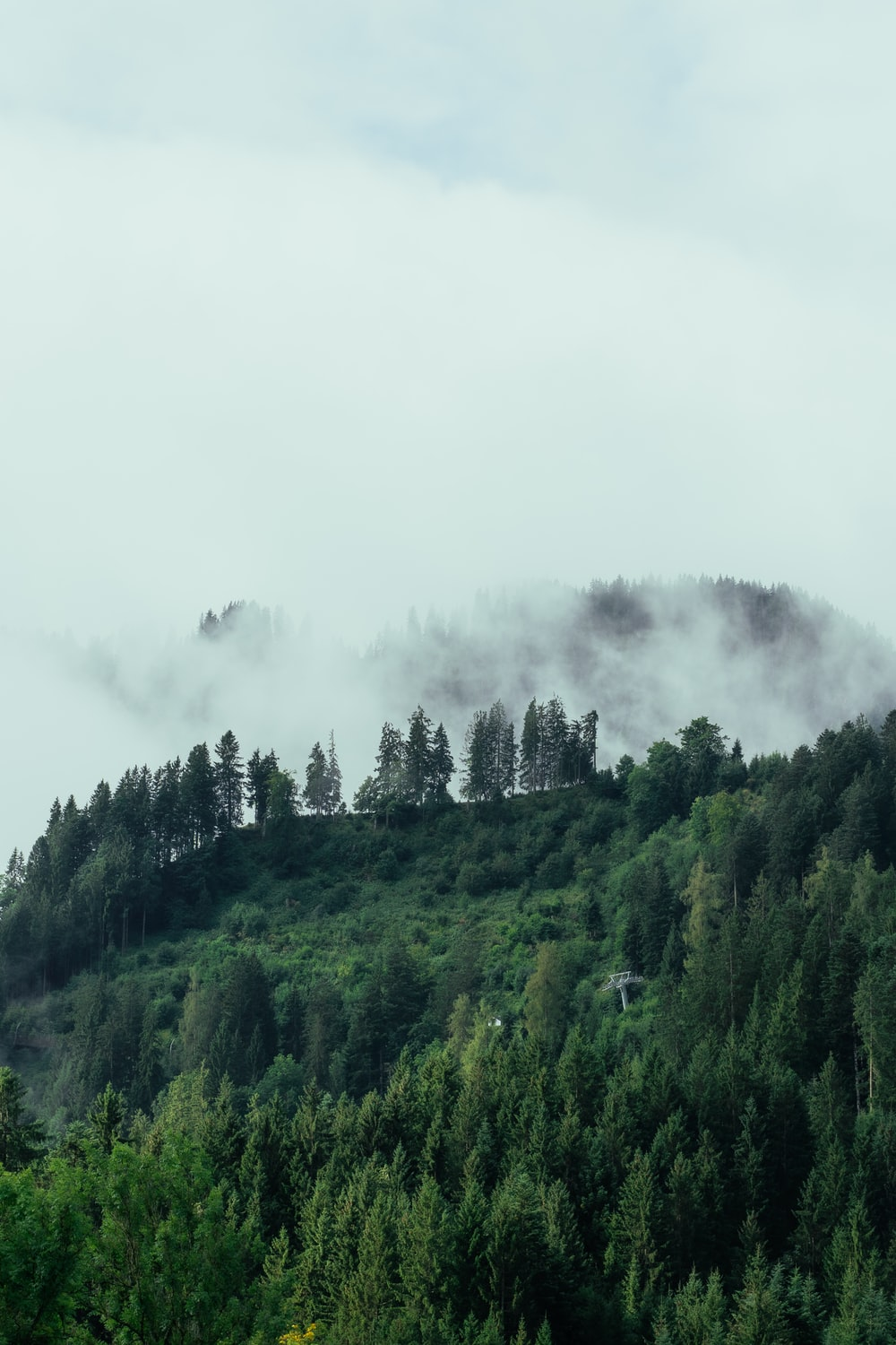 green trees on foggy weather
