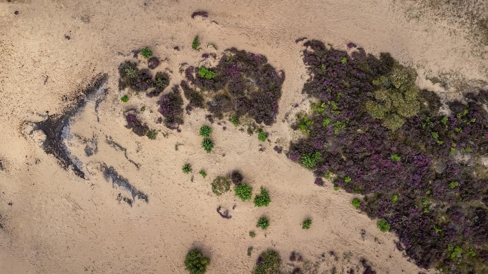 green moss on brown sand
