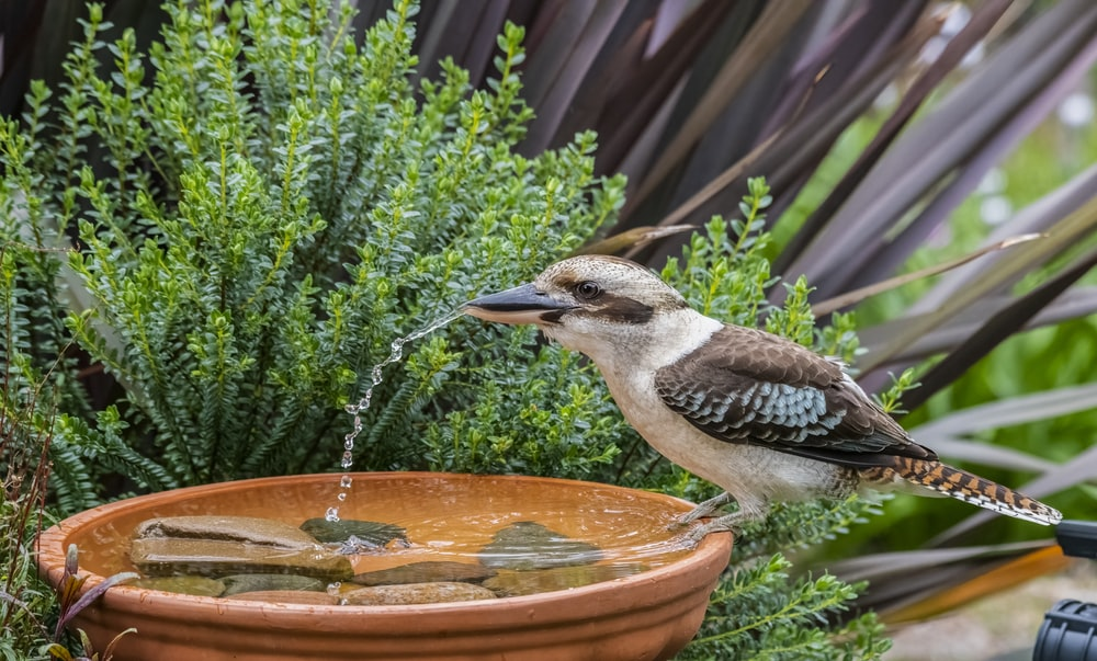 brown and white bird on brown round water fountain during daytime