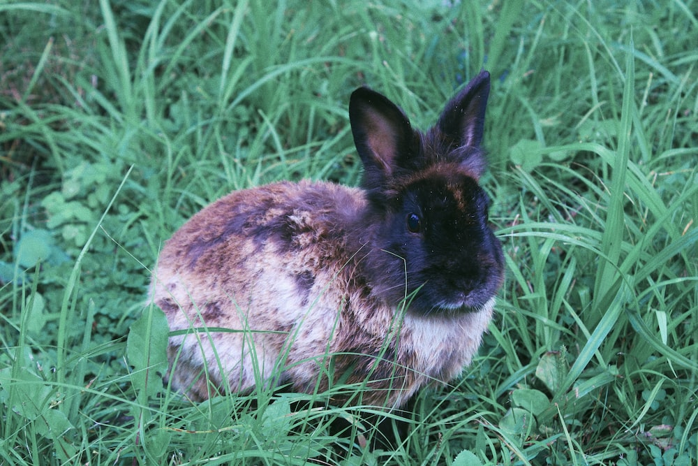 white and black rabbit on green grass during daytime