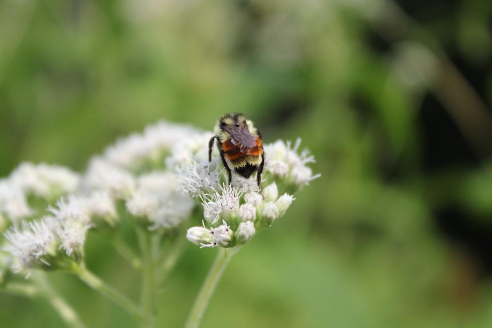 orange and black bug on white flower